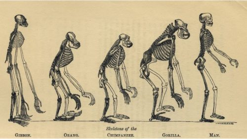 darwin-evrim-teorisini-ortaya-atan-bilim-adaminin-sira-disi-hayati8