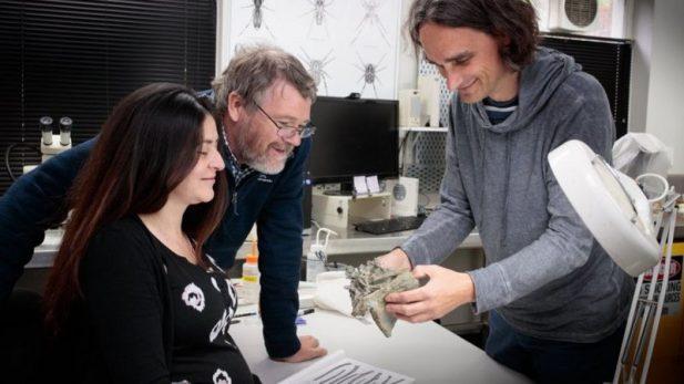 yeni-zelandada-insan-boyutunda-penguenlerin-fosilleri-bulundu1