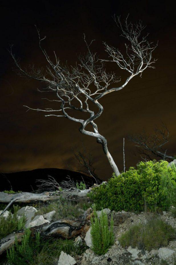 yeryuzu-fotografi-odulleri-aciklandi-doganin-geri-aldigi-terk-edilmis-alanlar3